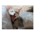 Postal de bostezo de la foto del gatito del jaspe