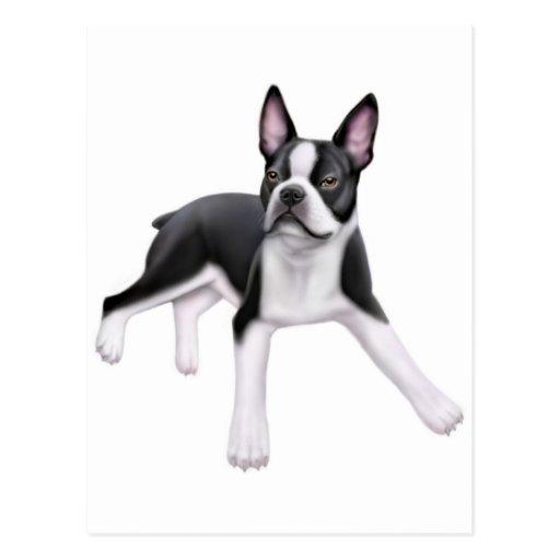 Postal de Boston Terrier