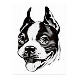Postal de Boston Terrier
