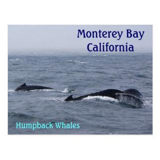 Postal de California de la bahía de Monterey