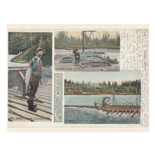 Postal de color salmón de la rueda del esturión