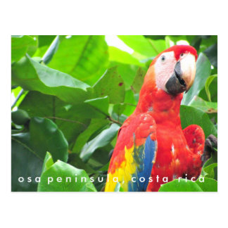 Postal de Costa Rica del Macaw del escarlata de la