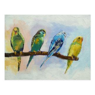 Postal de cuatro Parakeets