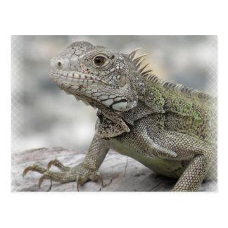 Postal de cuernos de la iguana