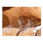 postal de dos leones de montaña