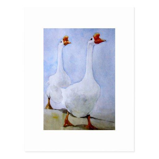 Postal de dos patos