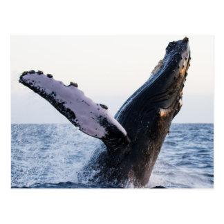 postal de GotScience.org: Violación de la ballena