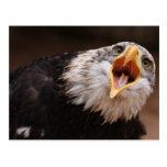 Postal de griterío de Eagle