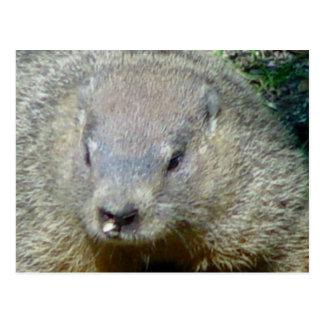 Postal de Groundhog