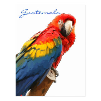 Postal de Guatemala del Macaw del escarlata