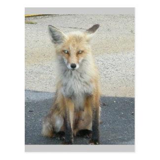 "Postal de IBSP de la ""vespa"" del Fox"