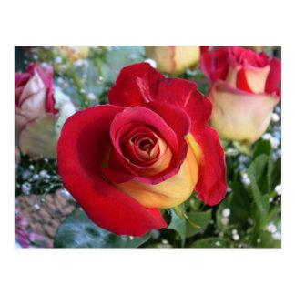 Postal de imagen color de rosa del ramo