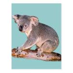 Postal de imagen de la koala