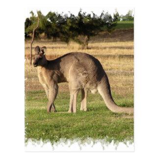 Postal de imagen del canguro
