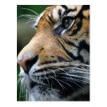 Postal de imagen del tigre