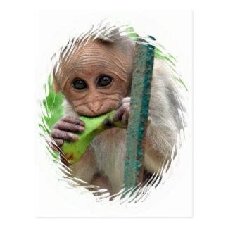 Postal de imagen divertida del mono