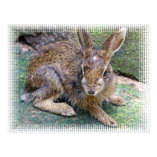 Postal de imágenes del conejo
