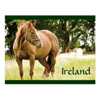 Postal de Irlanda (caballo en campo)