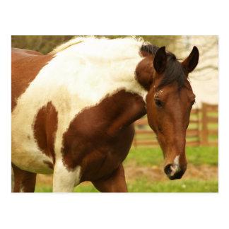 Postal de itinerancia del caballo de la pintura