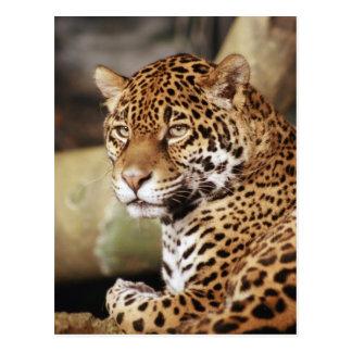 Postal de Jaguar