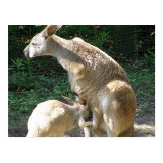 Postal de Joey del canguro