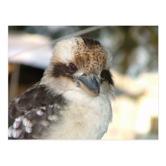 Postal de Kookaburra