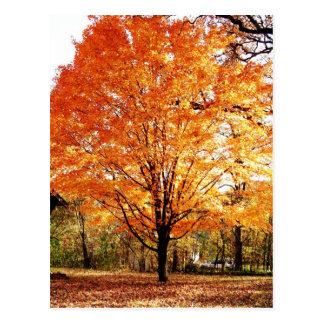 Postal de la acción de gracias de las hojas de oto