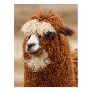 Postal de la alpaca