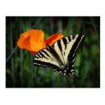 Postal de la amapola de California de la mariposa