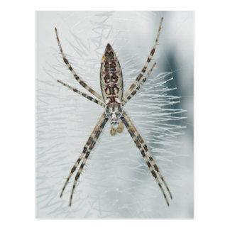 Postal de la araña del Argiope
