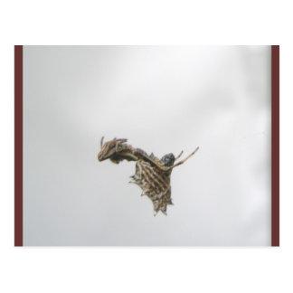Postal de la araña del tejedor del orbe de Micrath