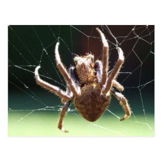 Postal de la araña del tejedor del orbe del jardín