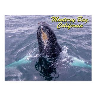 Postal de la bahía de Monterey del Humpback de