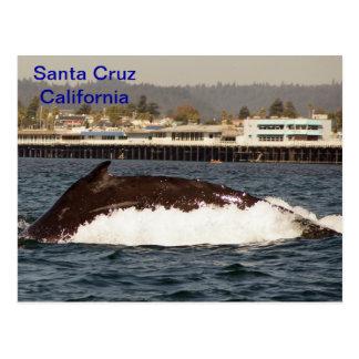 Postal de la ballena jorobada de Santa Cruz,