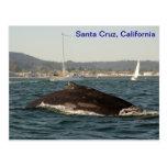 Postal de la ballena jorobada de Santa Cruz