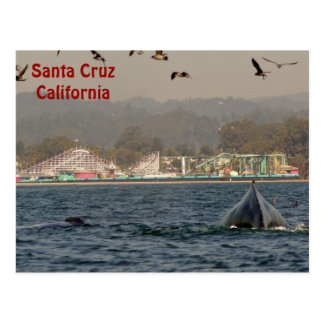 Postal de la ballena jorobada de Santa Cruz, Calif