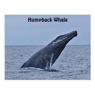 Postal de la ballena jorobada