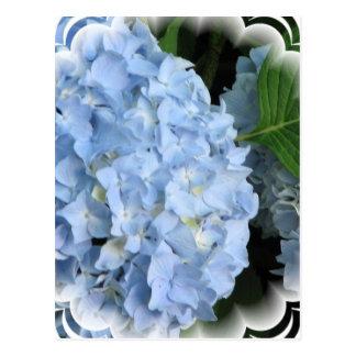 Postal de la belleza del verano del Hydrangea