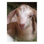 Postal de la cabra del niño