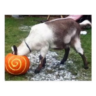 Postal de la cabra y de la calabaza