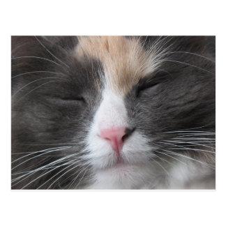 Postal de la cara del gatito