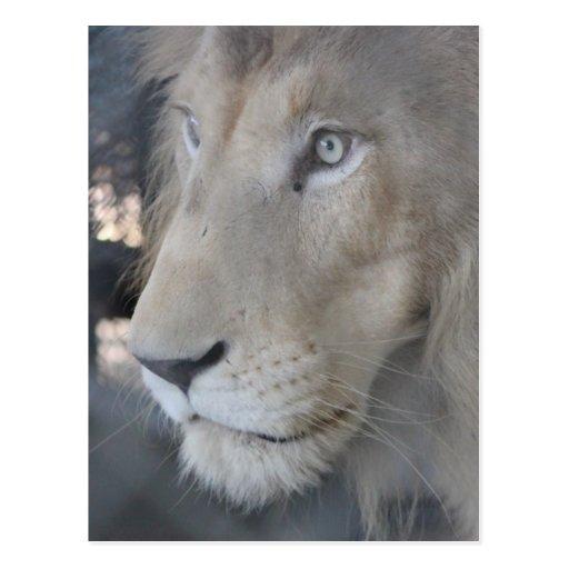 Postal de la cara del león