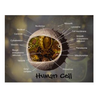 Postal de la célula humana