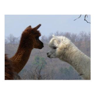 Postal de la charla de la alpaca