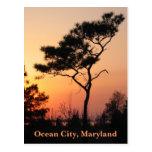 Postal de la ciudad del océano de la puesta del so