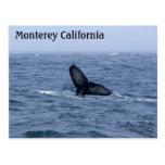 Postal de la cola de la ballena de Monterey Califo