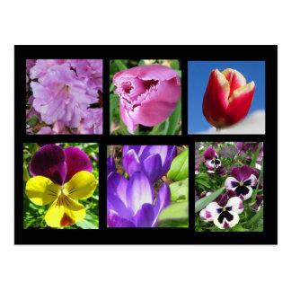 Postal de la colección de la flor de la primavera