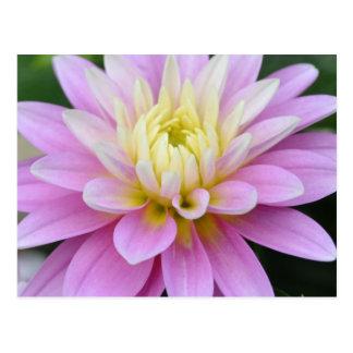 Postal de la dalia de la flor del zen