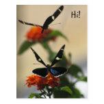 Postal de la danza 3 de la mariposa