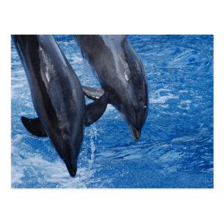 Postal de la demostración del delfín
